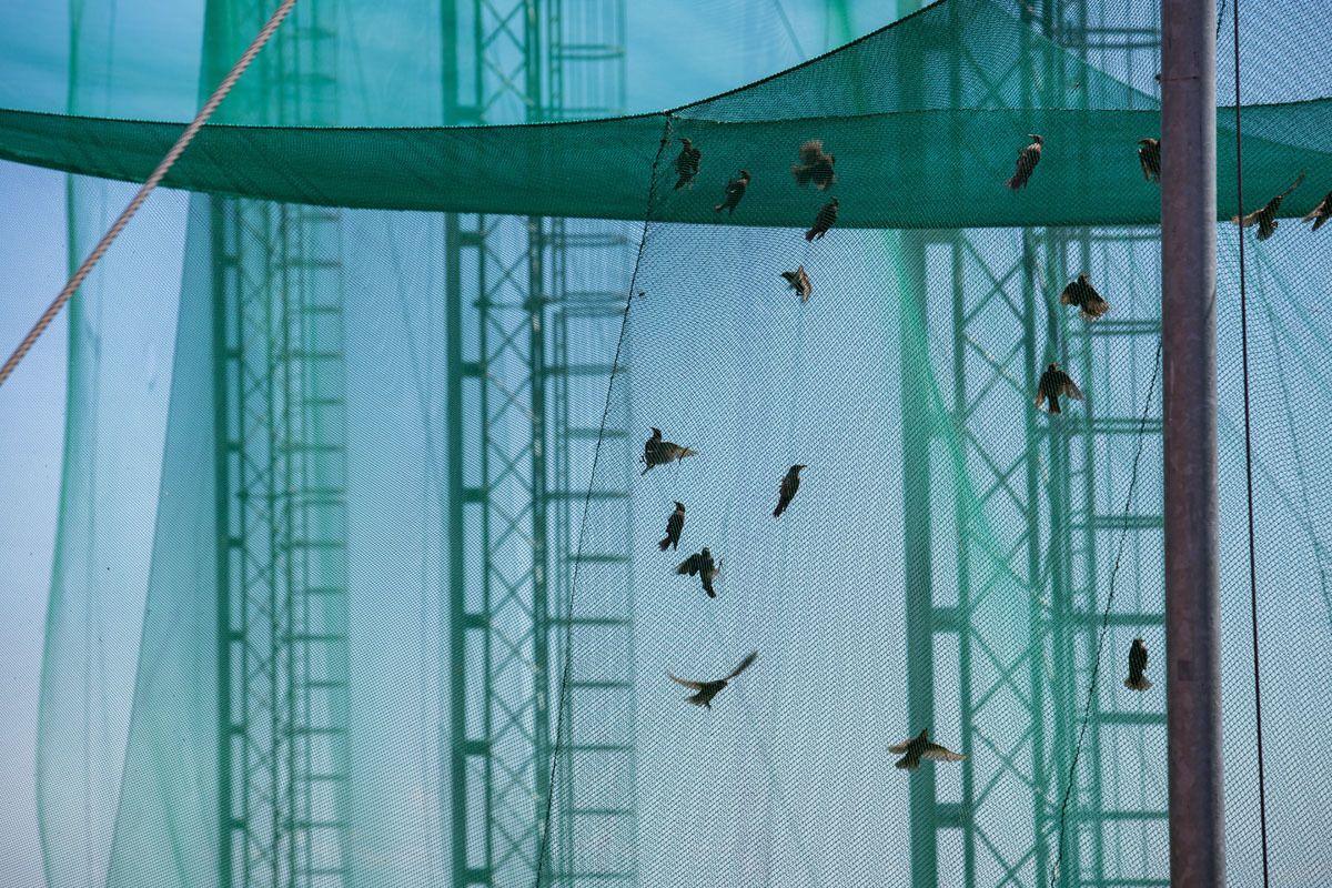 Ventės rago (T. Ivanausko) ornitologinė stotis
