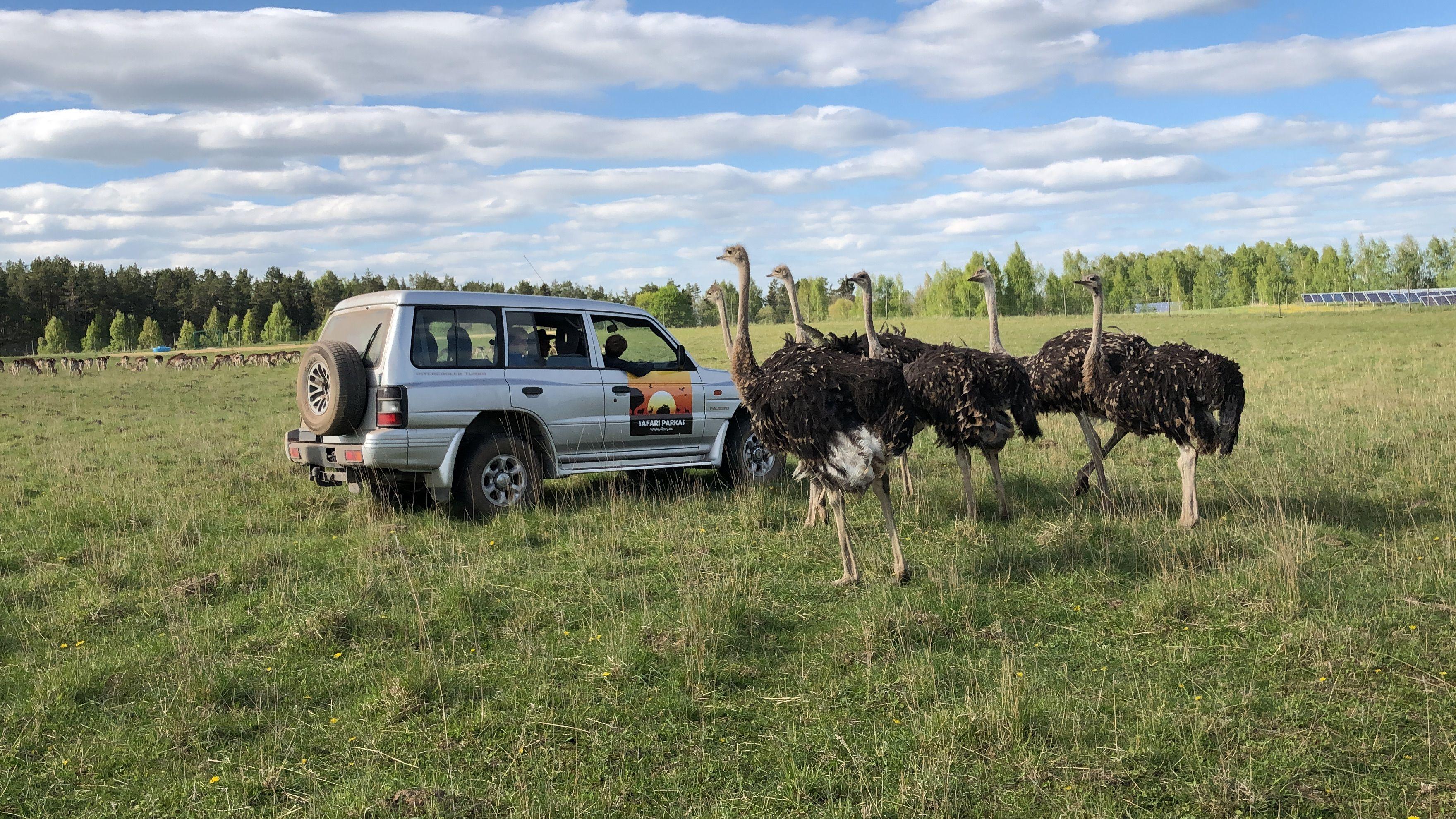 Safari parkas