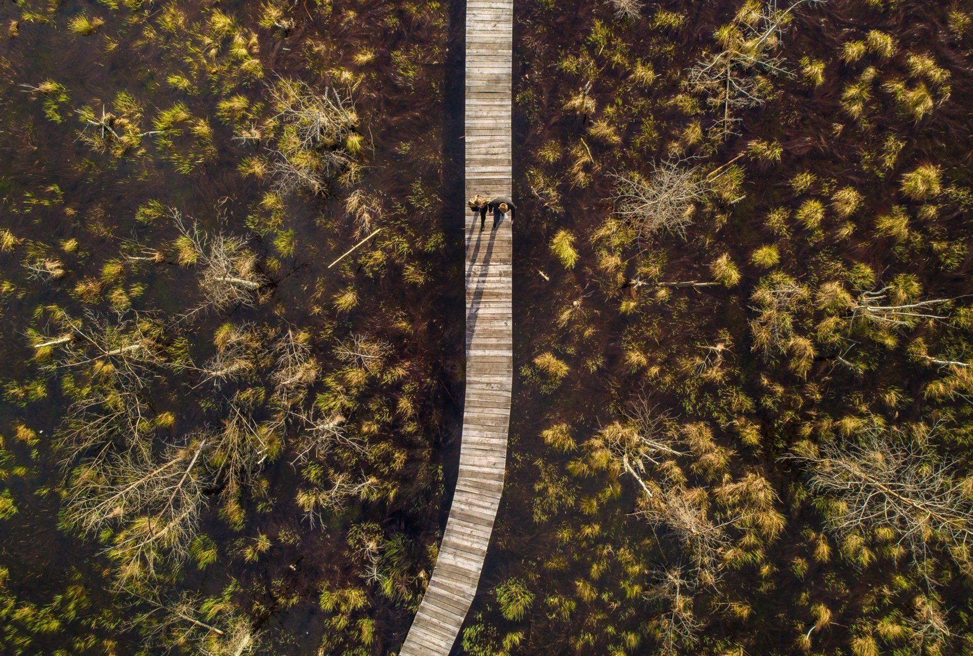 Dubravos rezervatinė apyrubė