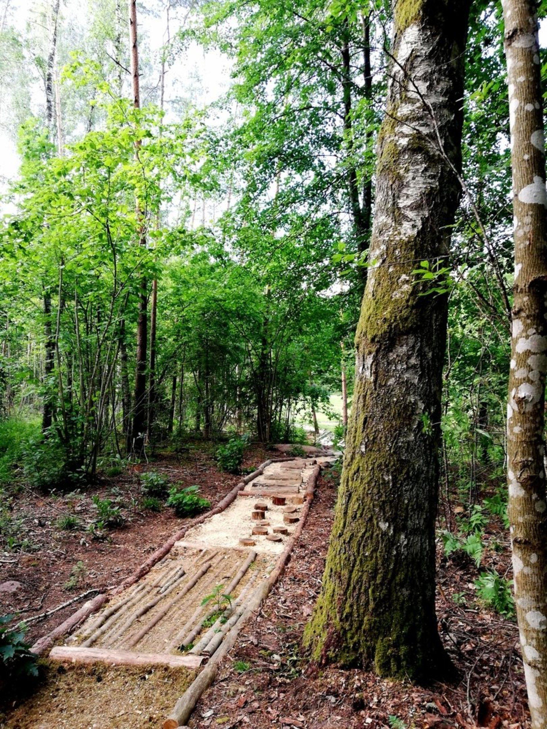 Anykščių šilelio eko basų kojų takas