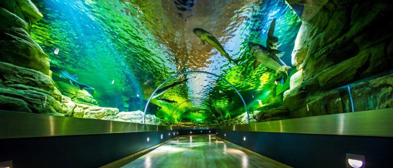 Jūrų muziejus ir delfinariumas