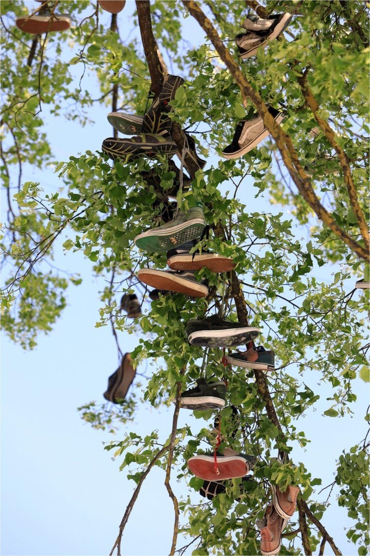 Batų medis