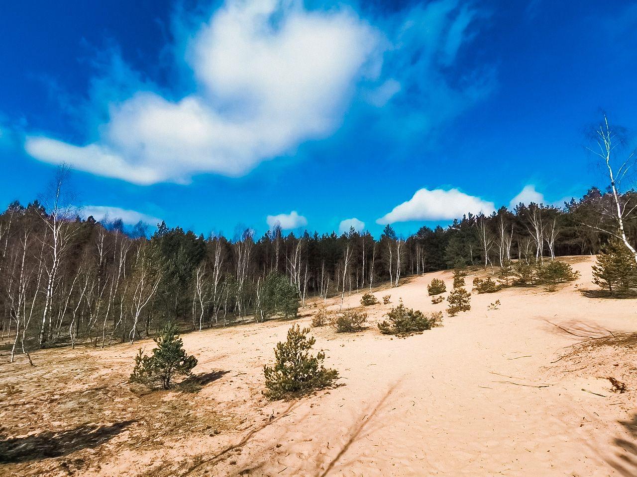 Bartkuškio miško žemyninė kopa